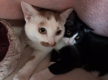 【今日のにゃんこ】毛布の中で仲良く温まる、ルウくんとラビくん