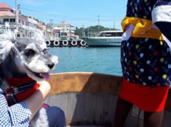 【今日のわんこ】新潟県の佐渡島に遊びに行ったサクラちゃん