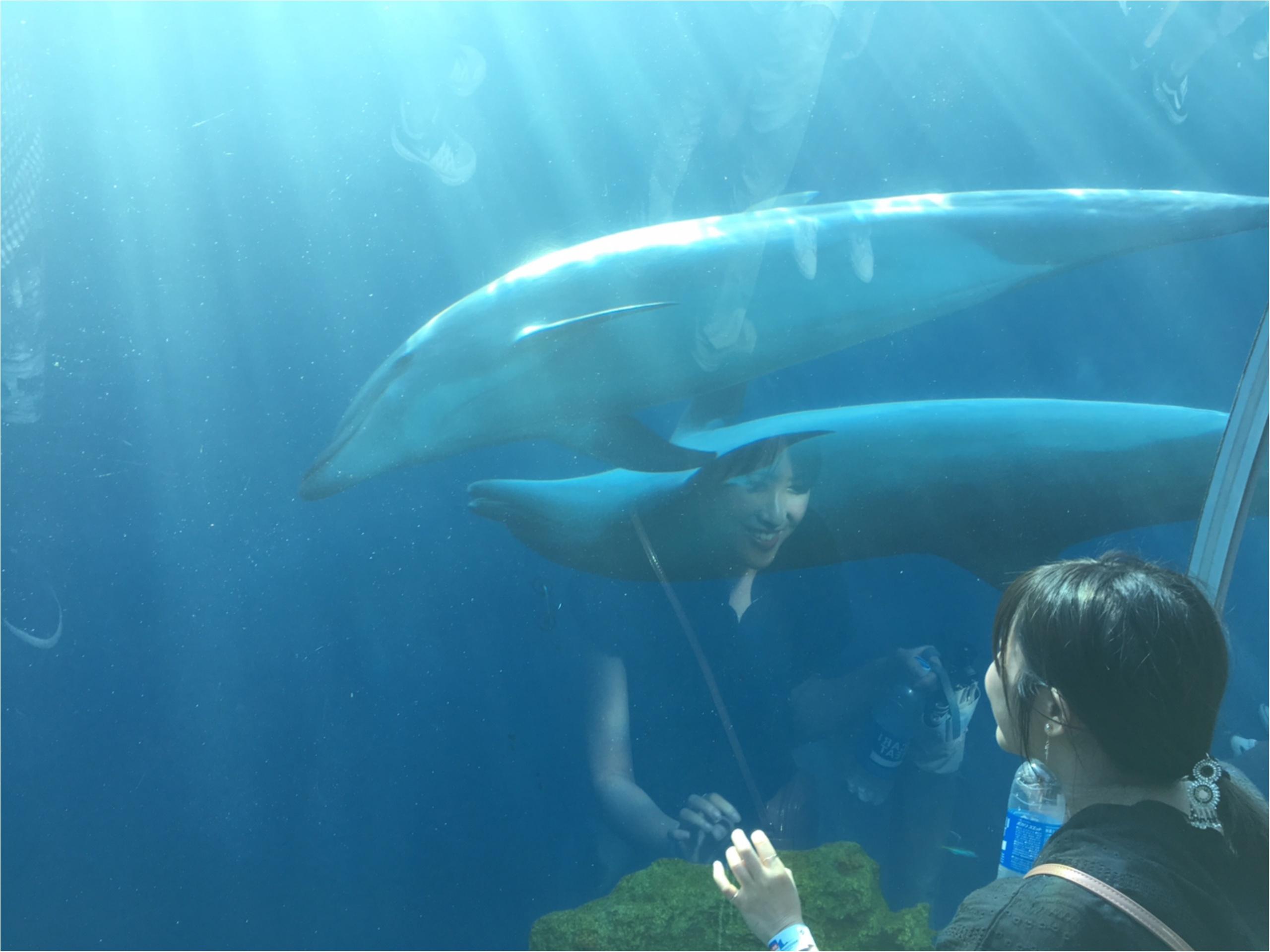 イルカの水族館