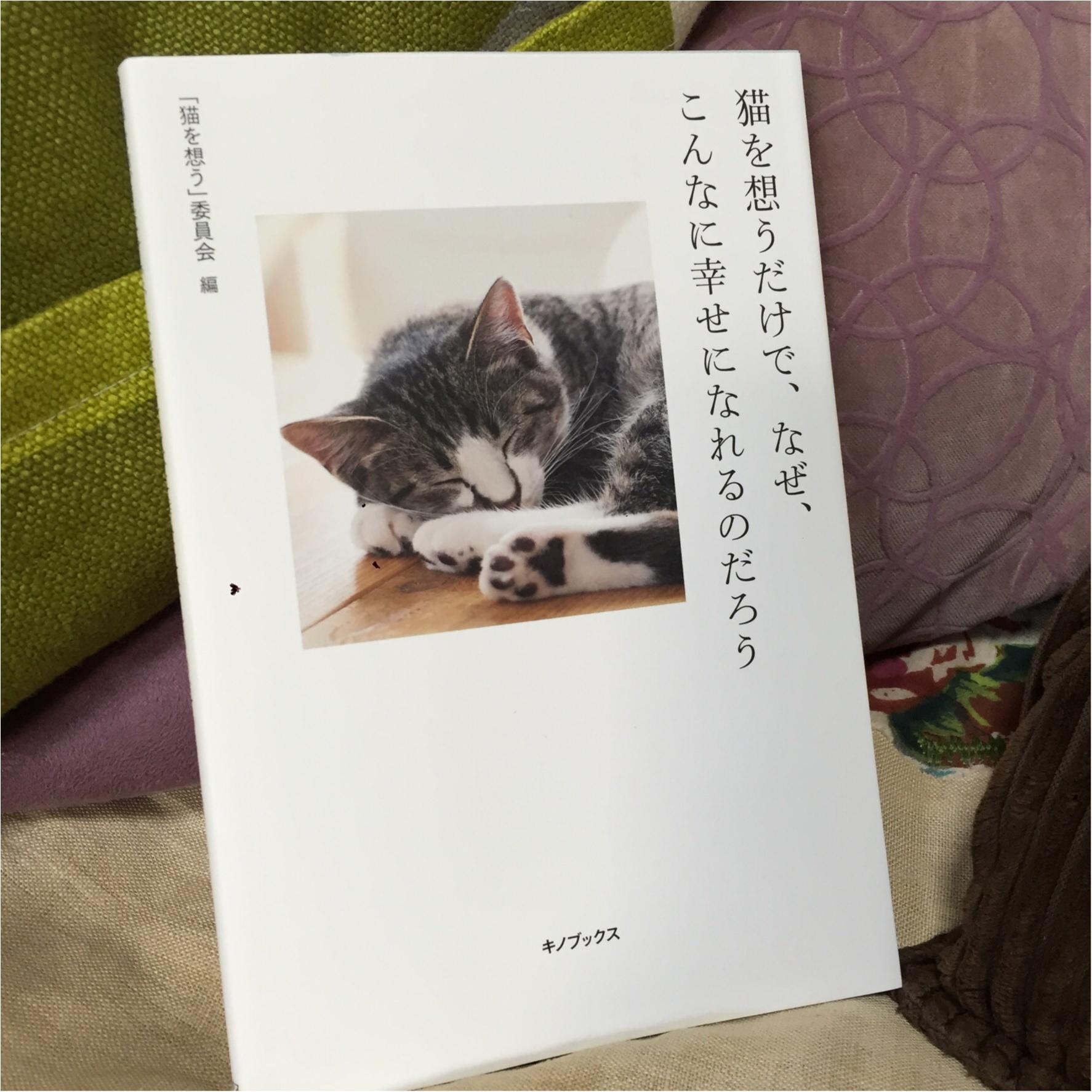 猫を想うと幸せになる。_1