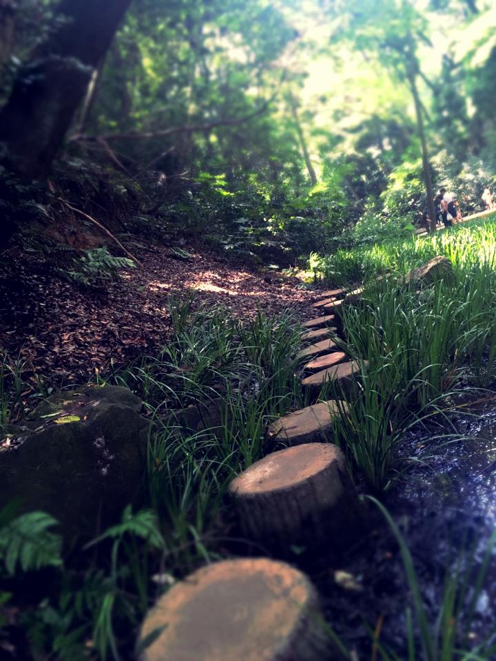 【癒しスポット】東京のオアシス。仕事に疲れたときは森林浴でリフレッシュ!_4