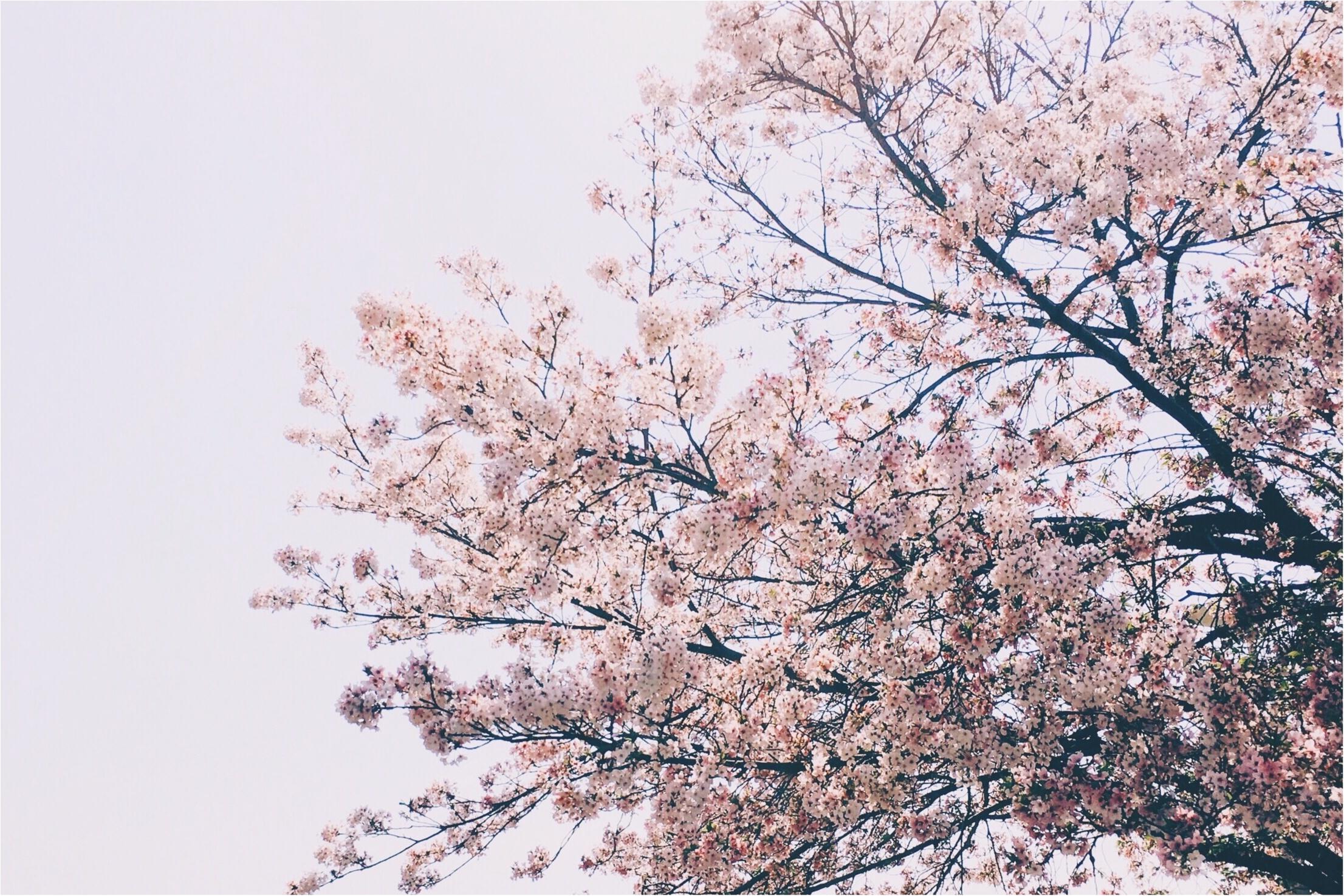 春の休日散歩♡モアハピ部いちさんとお食事に行ってきました!♡_1