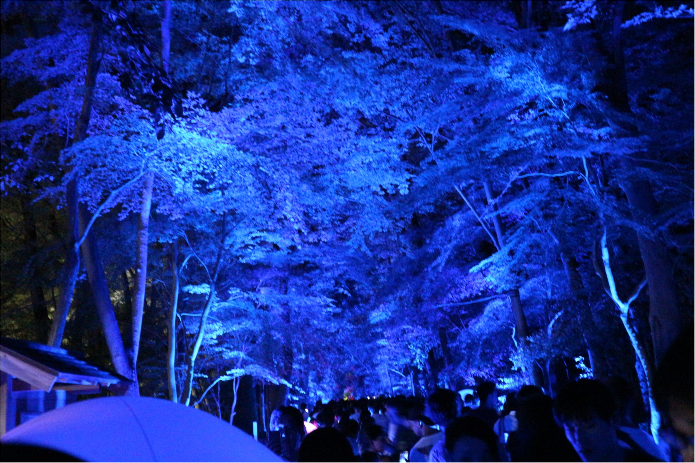 【京都】下鴨神社のライトアップで幻想的な夜を♡_2
