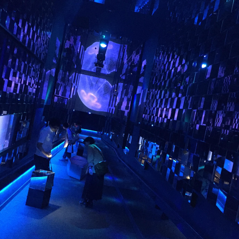 【6/18まで】すみだ水族館のスペシャルコラボ✨期間限定『ほたるの夜』でロマンチックな夜を♪♪ _6