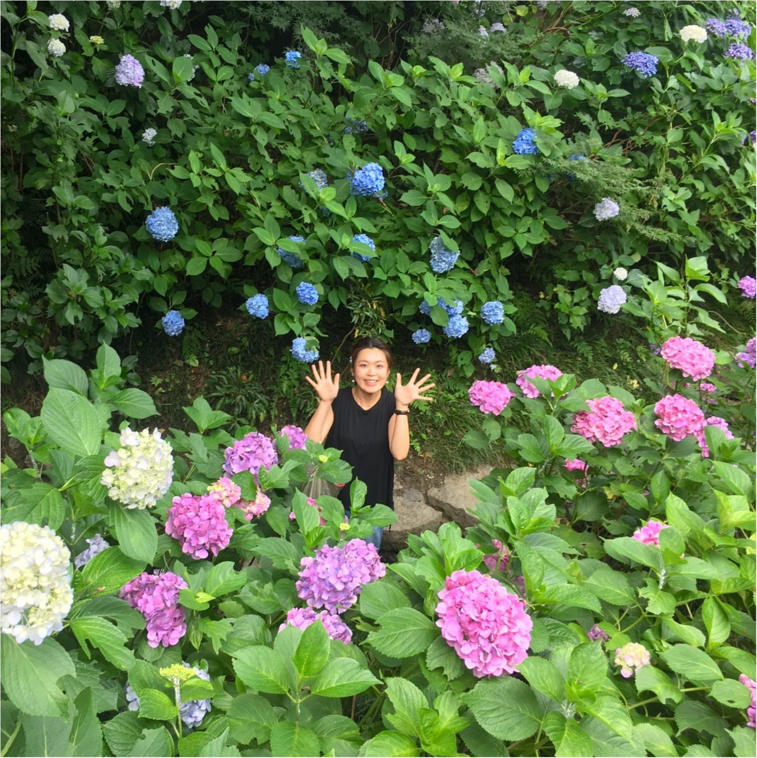 【\\あじさい寺//】まだ間に合います!奈良のおすすめスポット♡矢田寺をご紹介♪_4