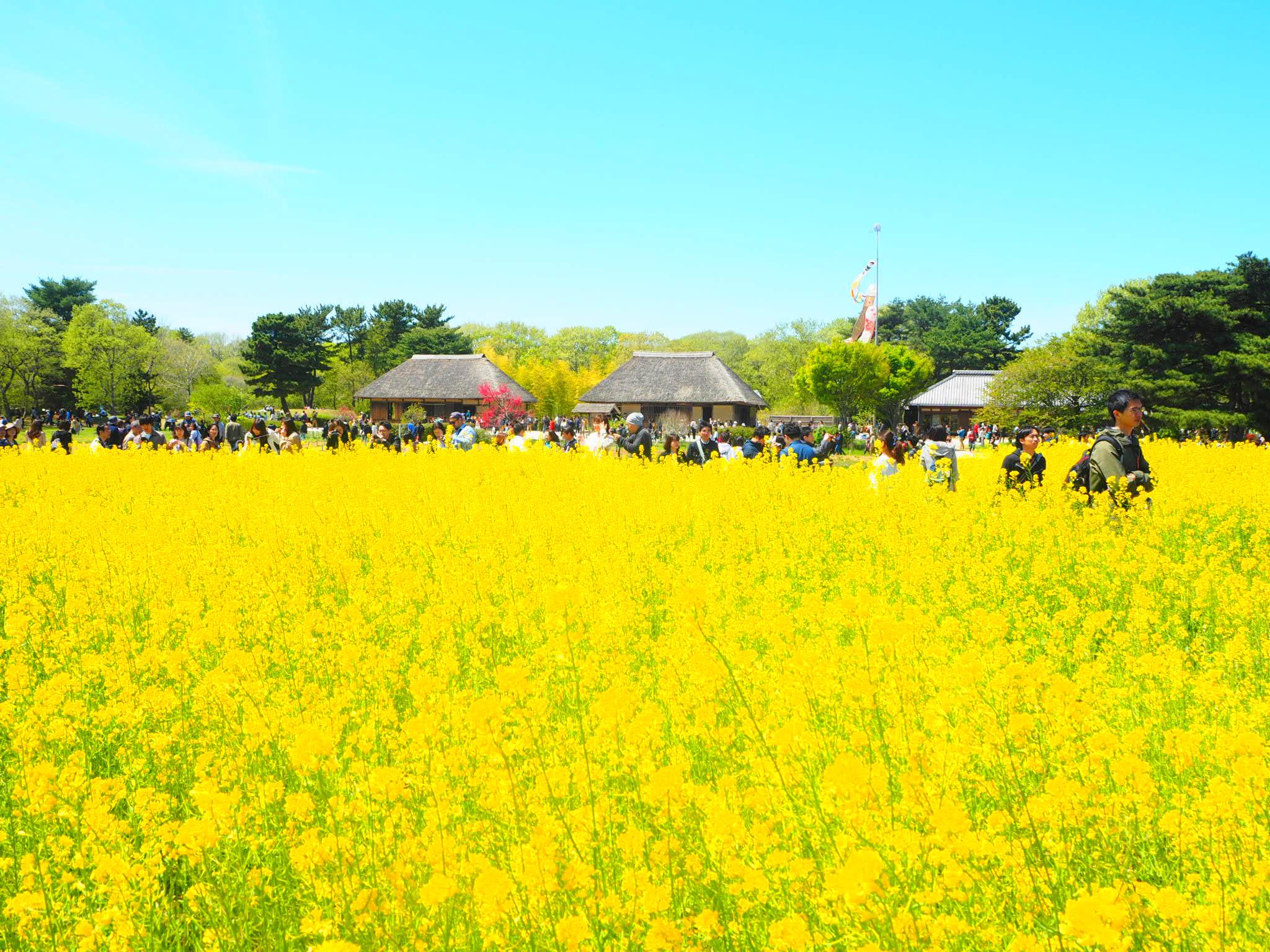 【GW】東京からも近い!!ひたち海浜公園ネモフィラのバスツアーに行ってきました♡_5