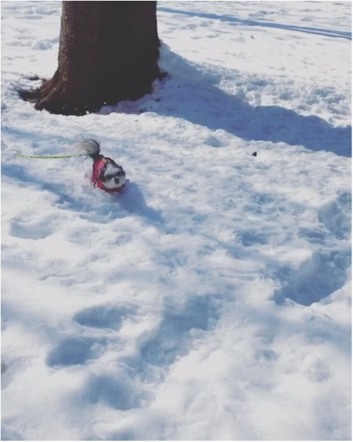 【今日のわんこ】なんてキレイなんだろう! 太郎くんは雪にうっとり_1