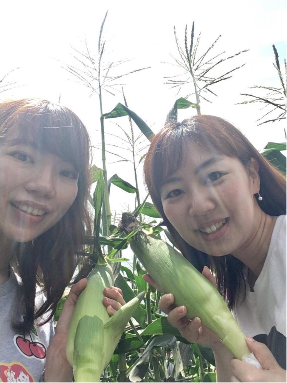 【HISバスツアー】60万本の奇跡!明野ひまわり畑と「清里テラス」&収穫体験ツアー_6