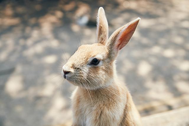 【広島女子旅】猫の尾道とうさぎの大久野島。可愛いおいしいインスタ映えな1 泊2日旅行_25