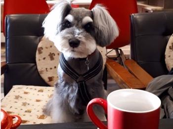【今日のわんこ】カフェで終始おりこうさんだったサクラちゃん