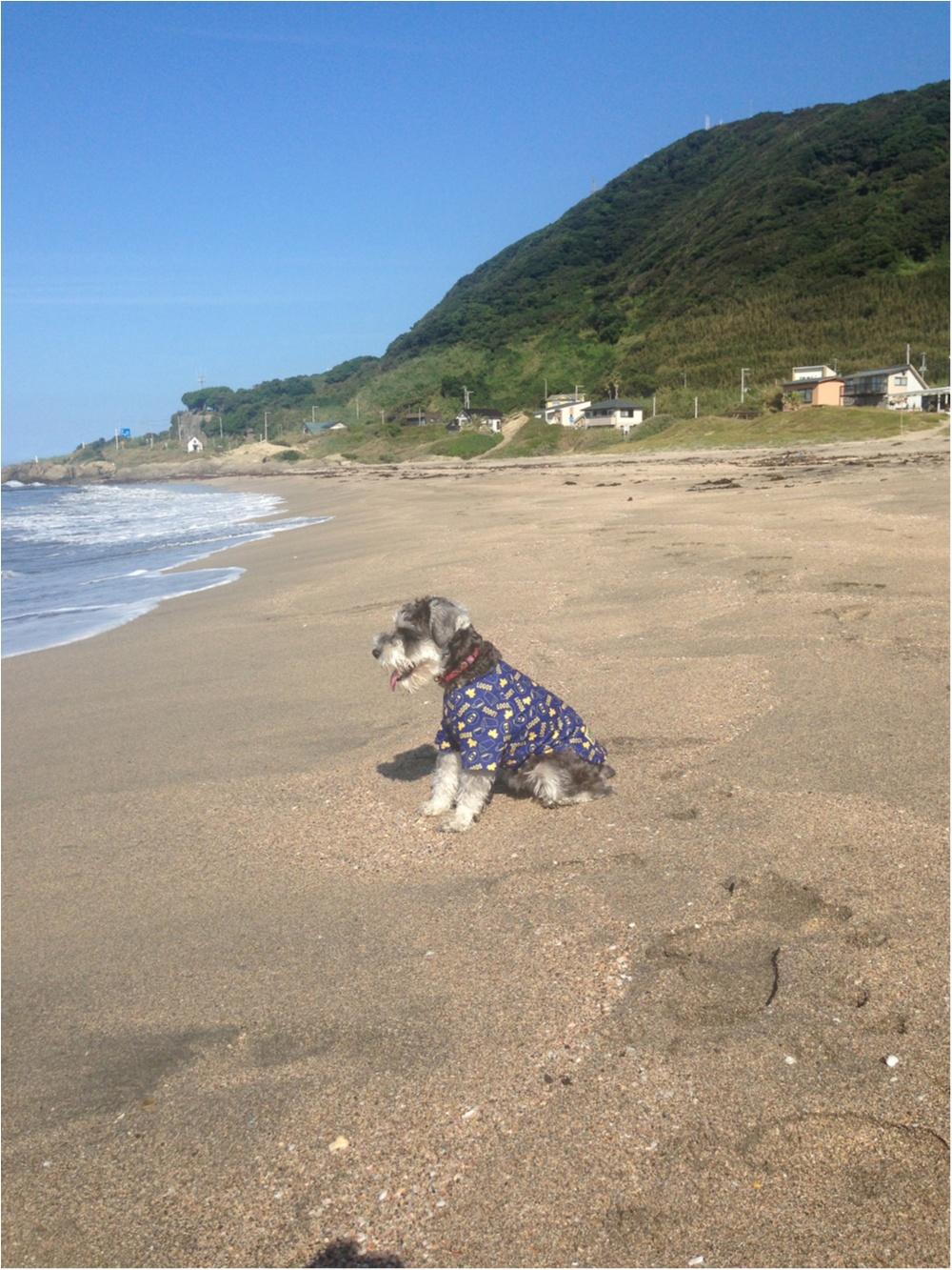 【今日のわんこ】びっくり! 海を初めてみたサクラちゃん_1