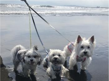 【今日のわんこ】夏の思い出♪ お友達と海に来た太郎くん!