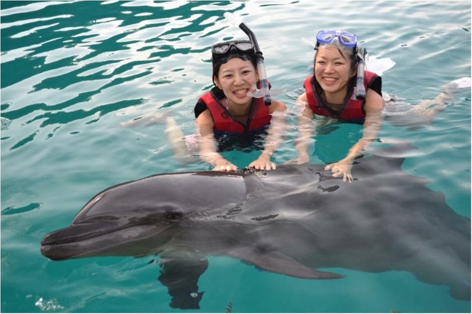 【travel】パラオでイルカに乗ろう~死ぬまでにやりたいことの1つ~_6