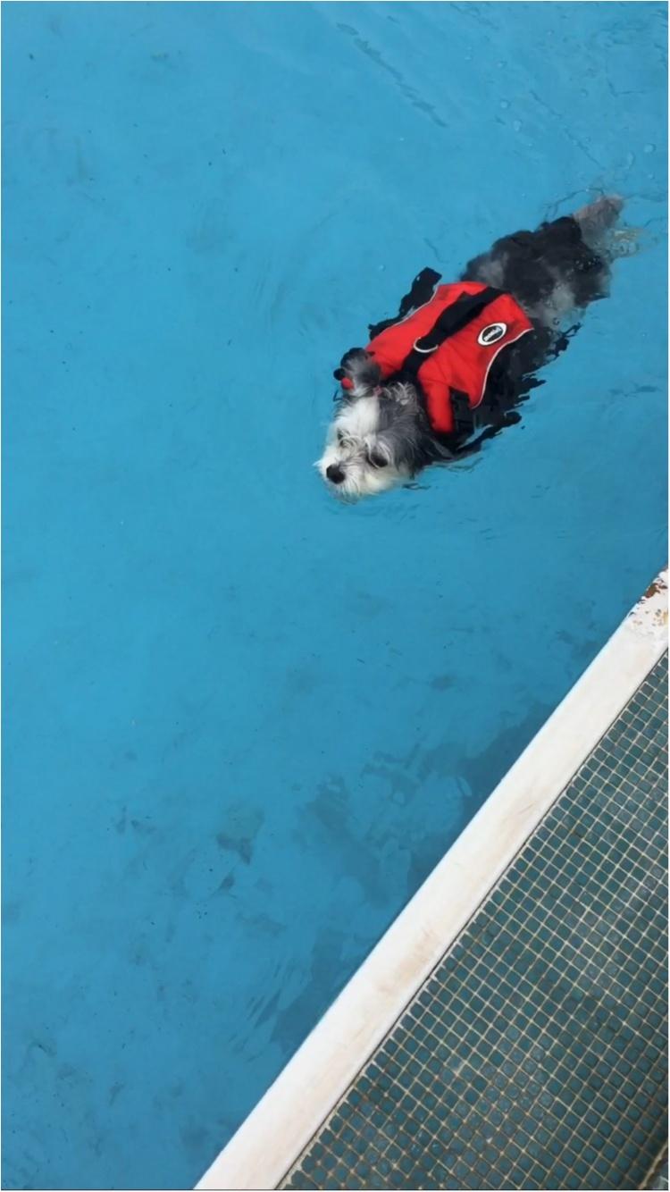 【今日のわんこ】暑い日はプールに限る♡ 太郎くんが水泳姿を披露_1
