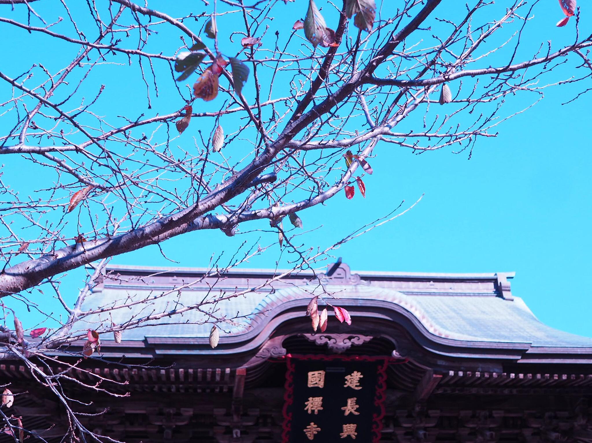 【#秋の鎌倉さんぽ】古民家でいただく絶品ビーフシチューと北鎌倉の紅葉♡_9