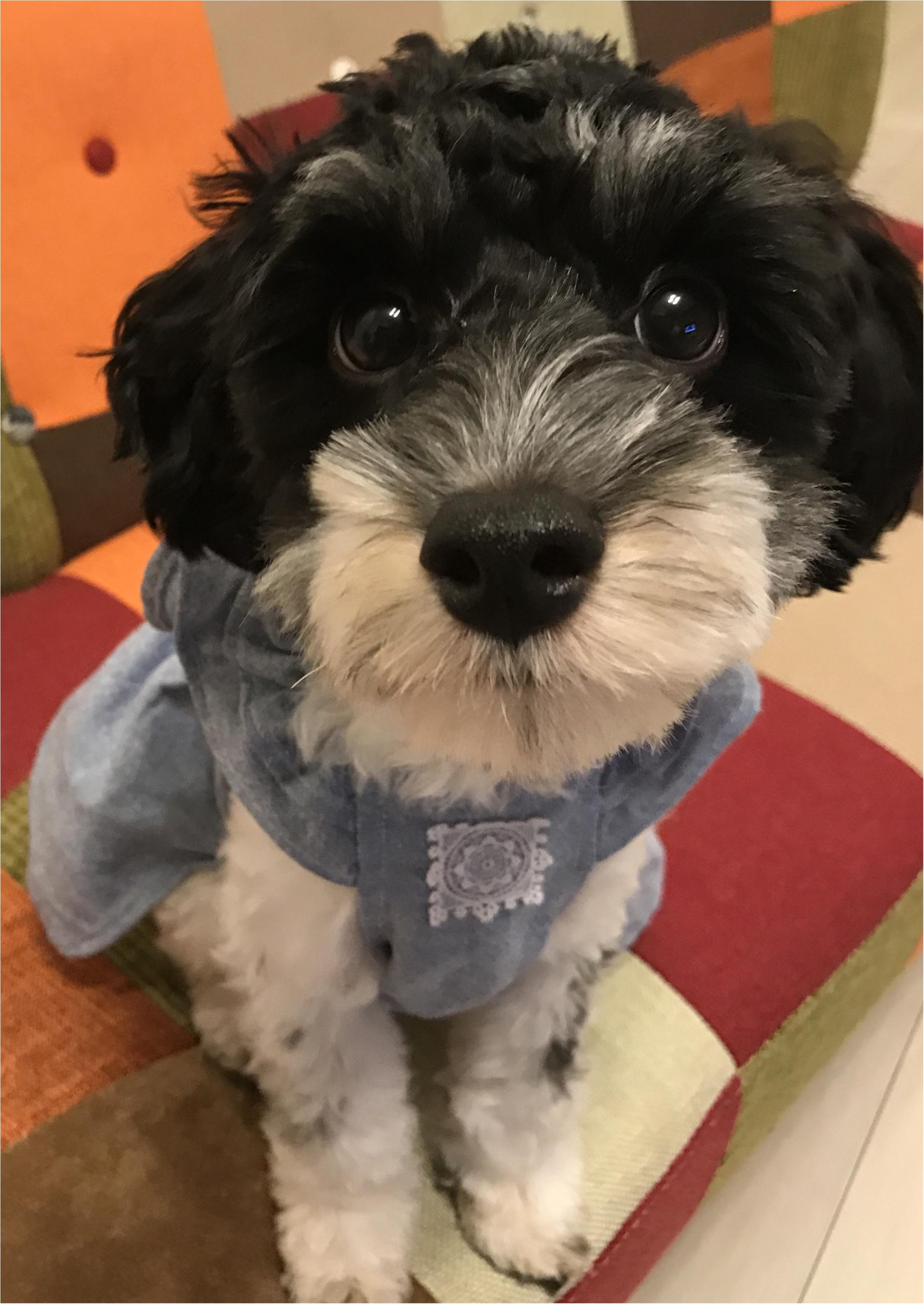 【コーデ】MHLのTシャツで白Tコーデ☆愛犬とカジュアルで動きやすい服装でマルシェに出店! _2