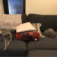 【今日のにゃんこ】絶妙な距離感♡ レオくん&ムクくんは、同じソファでくつろぎ中