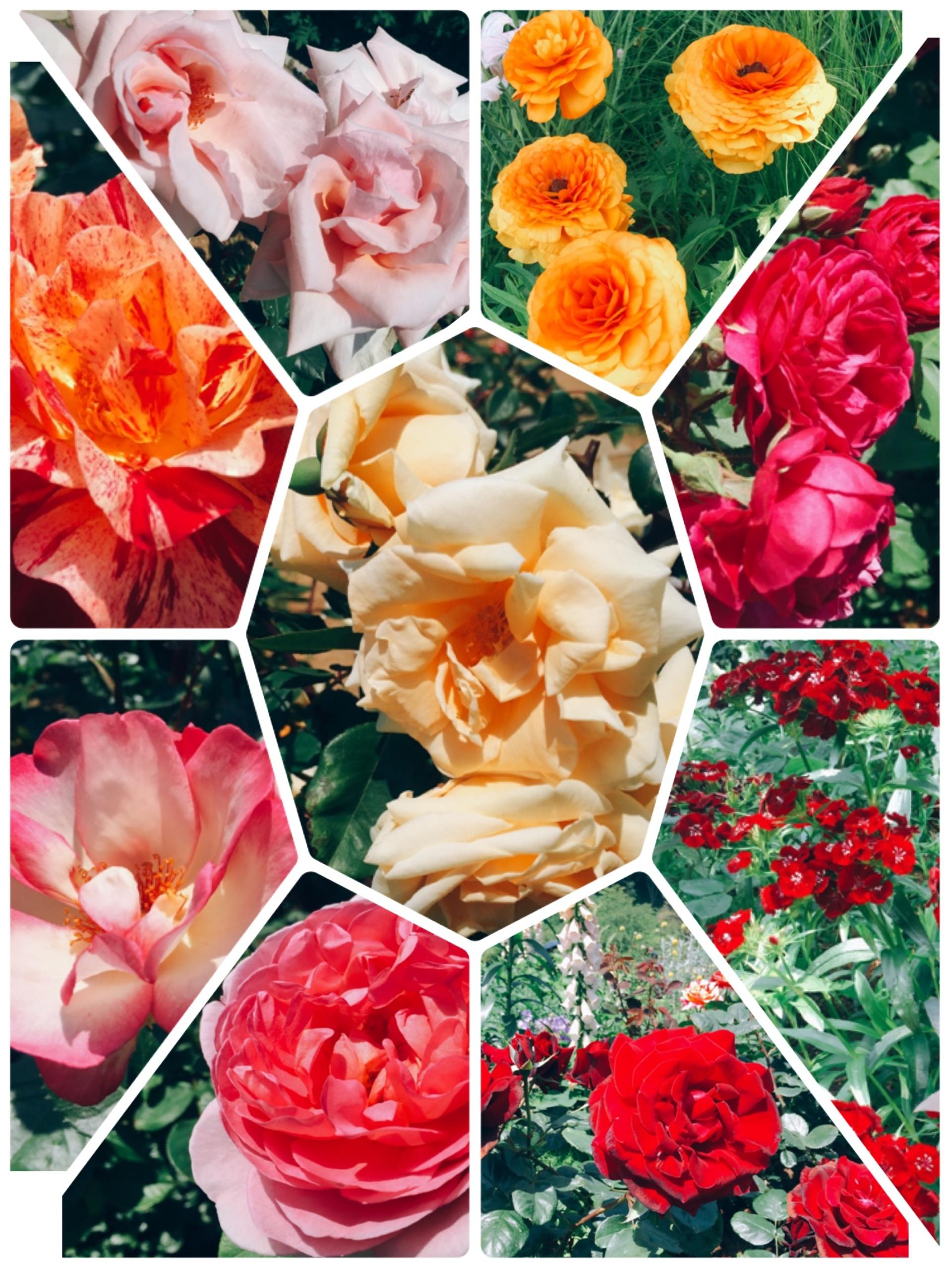 【お出掛けスポットin熱海】今が見頃のローズガーデン!薔薇のトンネルにうっとり…♡_9