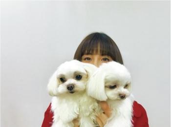 【お疲れの時のリフレッシュ方法は?】篠田麻里子ちゃんは、愛犬たちと遊ぶこと!