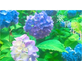 《 鎌倉 》へは今行くのがおすすめ!紫陽花が見頃です ♡