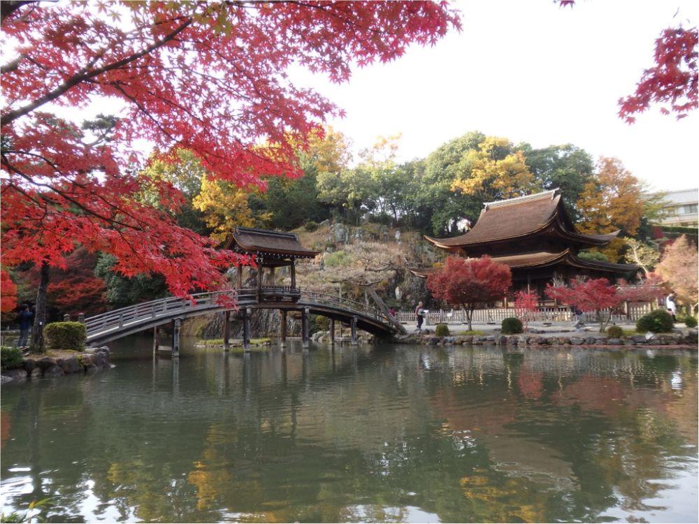 岐阜女子旅特集《2019年版》- 「モネの池」や「モザイクタイルミュージアム」などおすすめのスポット&グルメまとめ_32