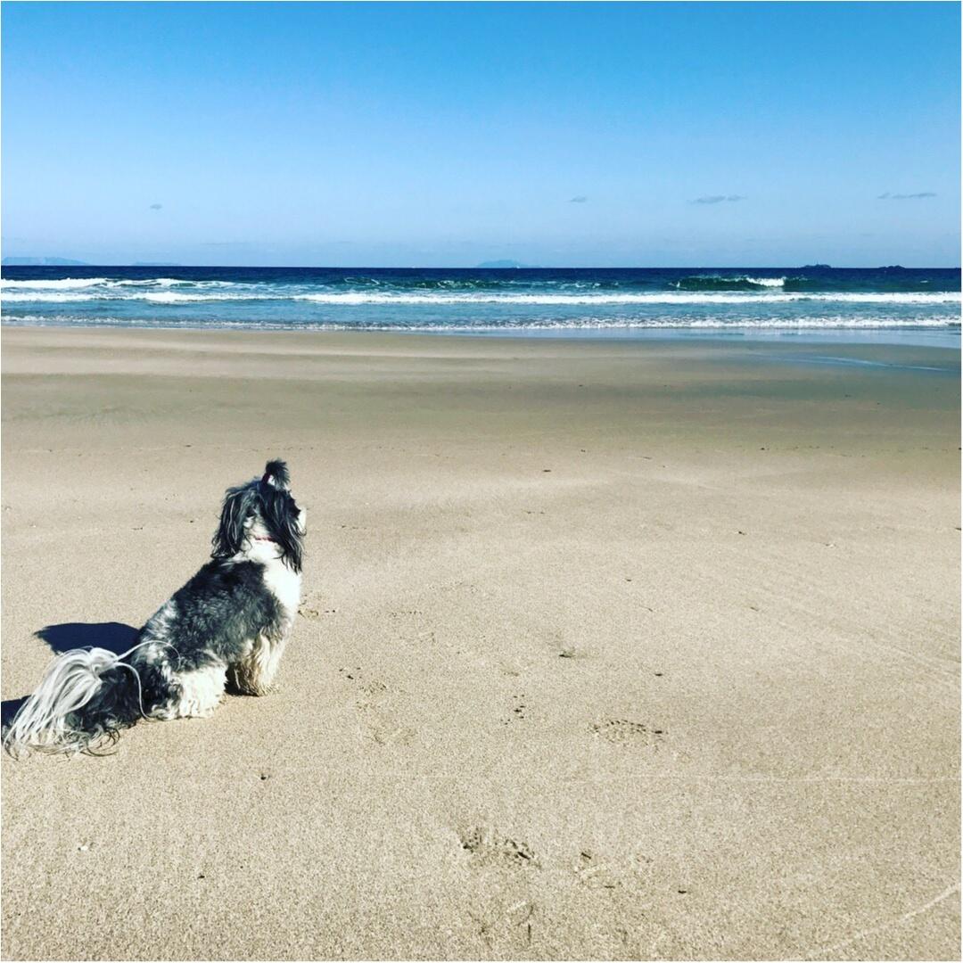 【今日のわんこ】見とれちゃう♡ 海を眺める太郎くん_1