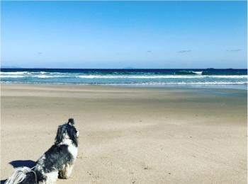 【今日のわんこ】見とれちゃう♡ 海を眺める太郎くん