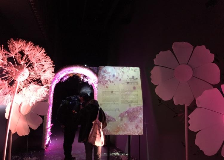 日本一早いお花見!?FLOWERS BY NAKEDに行ってきました♡_7