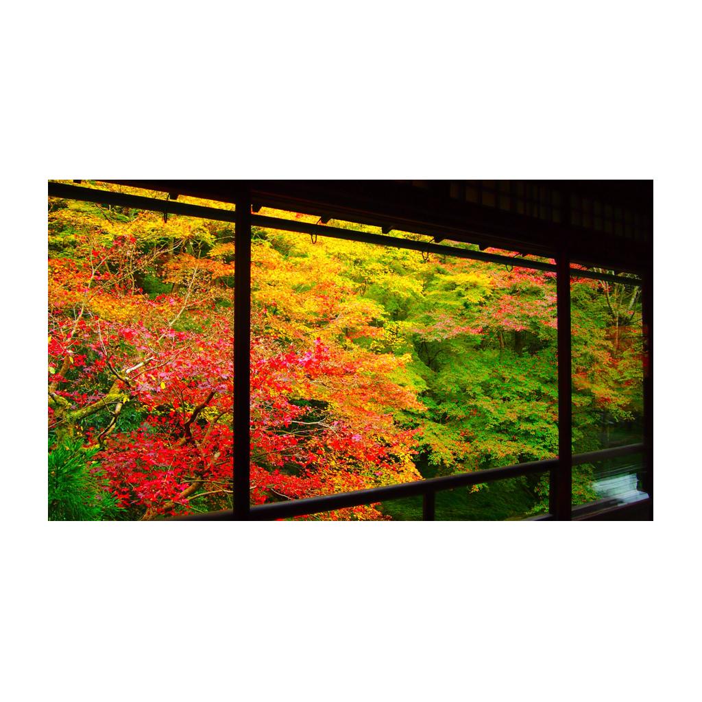 京都のインスタ映え紅葉スポットは『瑠璃光院』!! 人数制限ありなのでお早めに♡ 今週の「ご当地モア」ランキング!_1_1