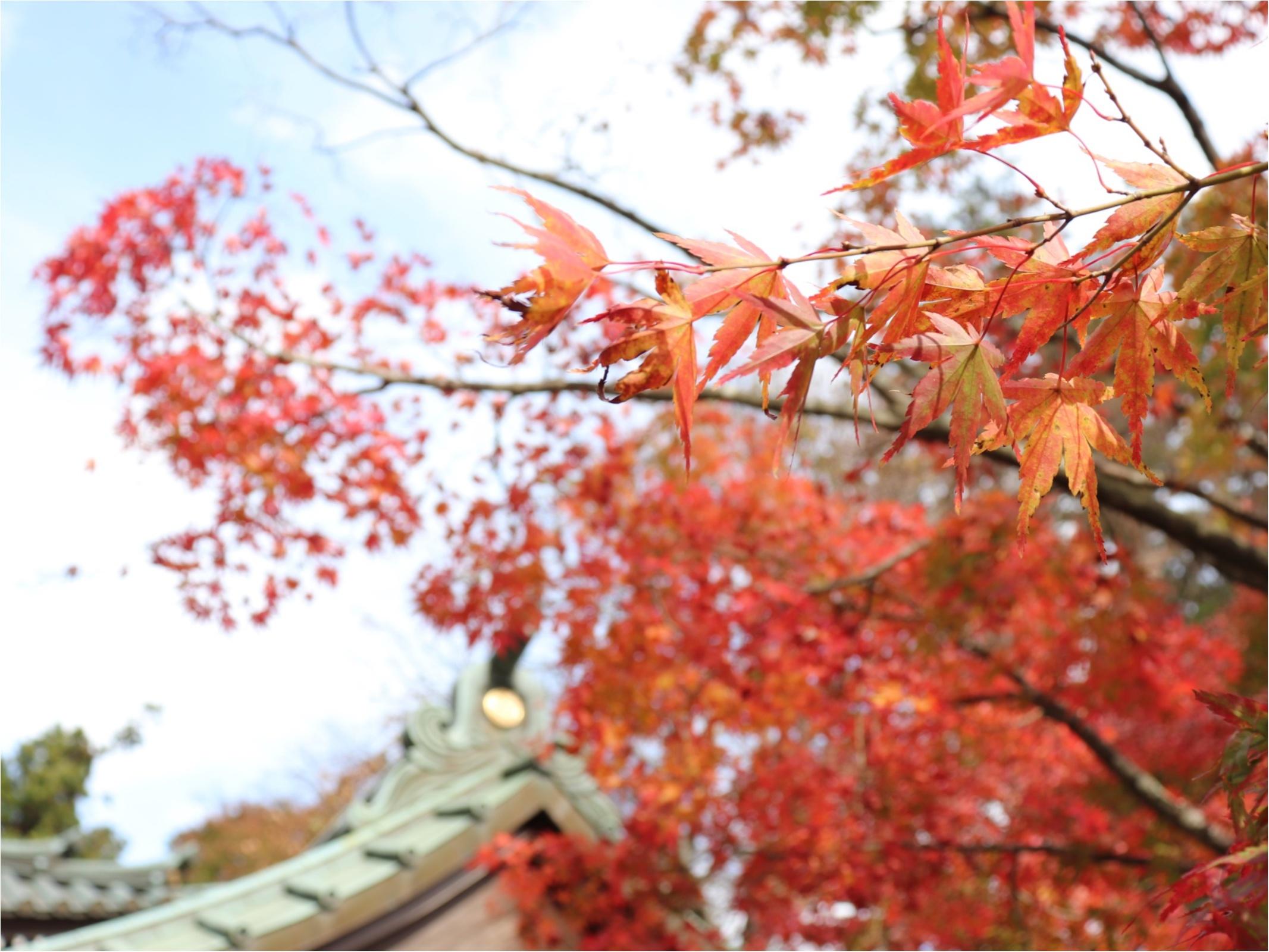 ▷2018年振り返り【秋のお出かけ】高尾山の紅葉狩りに行ってきました!!_2