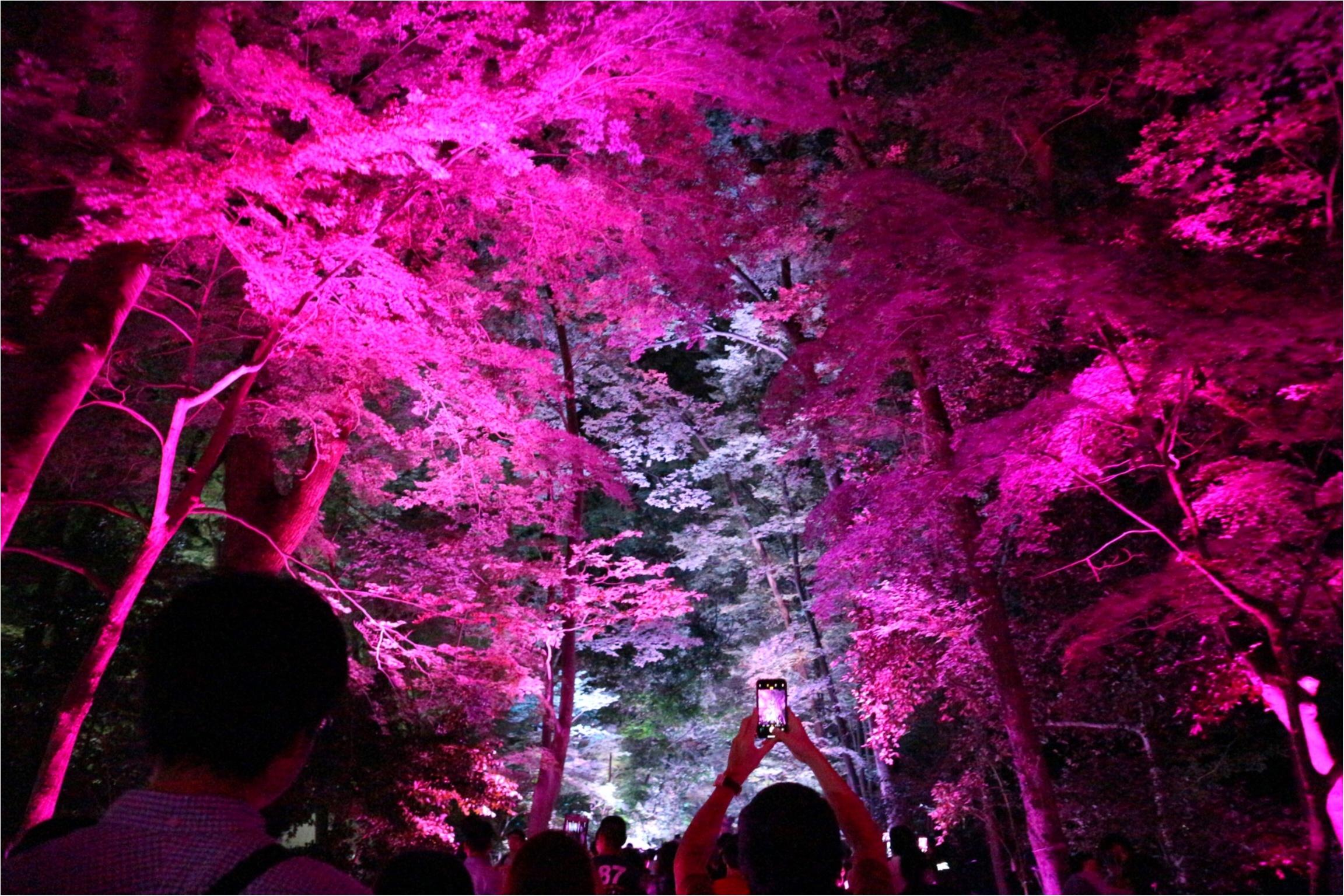 【京都】下鴨神社のライトアップで幻想的な夜を♡_1