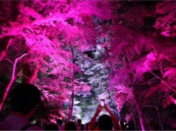 【京都】下鴨神社のライトアップで幻想的な夜を♡