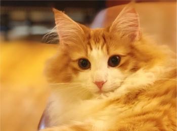 ねこたんとたわむれたい方必見!!【綺麗すぎる猫カフェ】in池袋