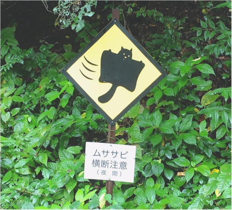 軽井沢女子旅特集 - 日帰り旅行も! 自然を満喫できるモデルコースやおすすめグルメ、人気の星野リゾートまとめ_77