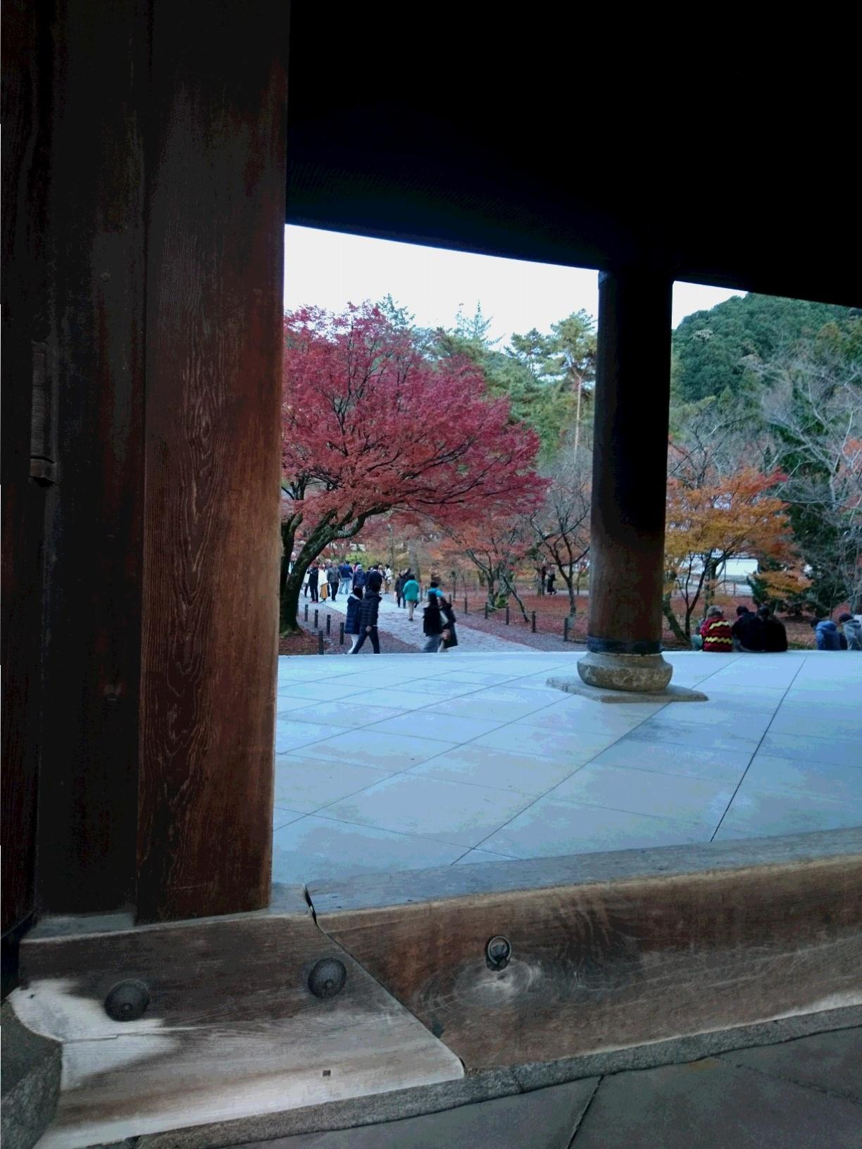 今が見ごろ!関西の紅葉スポット【京都】秋を感じてきました。_2