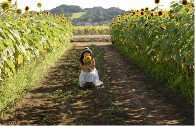 【ジェニ旅】東京ドーム2個分のひまわり畑!! 『益子ひまわり祭』で平成ラストサマーを全力で楽しむ♡_5