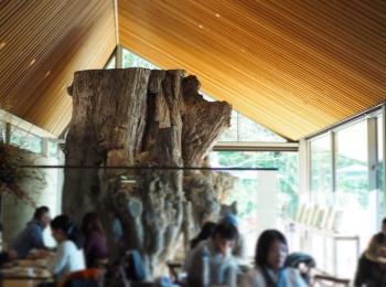 【#秋の鎌倉さんぽ】紅葉の鶴丘八幡宮♡ あの銀杏に会えるカフェ。