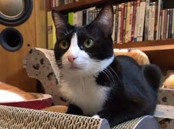 【今日のにゃんこ】猫 on the 猫。なルウくん★
