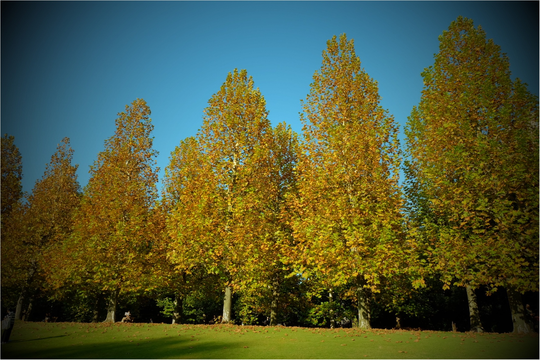 東京でも絶景の紅葉が!《新宿御苑》で秋が始められますよ〜!!フォトスポット&コーディネートも合わせてご紹介!_1