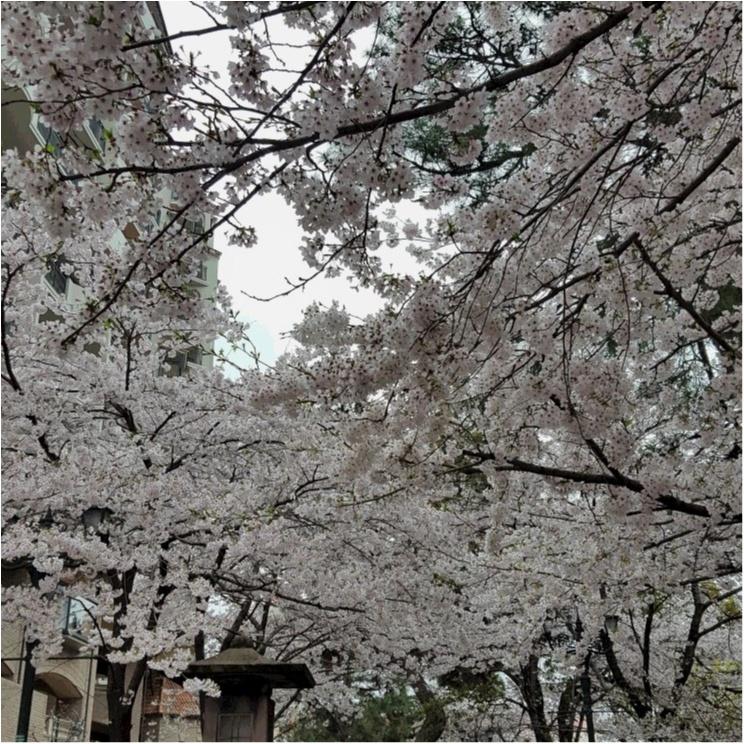 花のみちを通って、おしゃれな和カフェでほっこりしませんか?_3