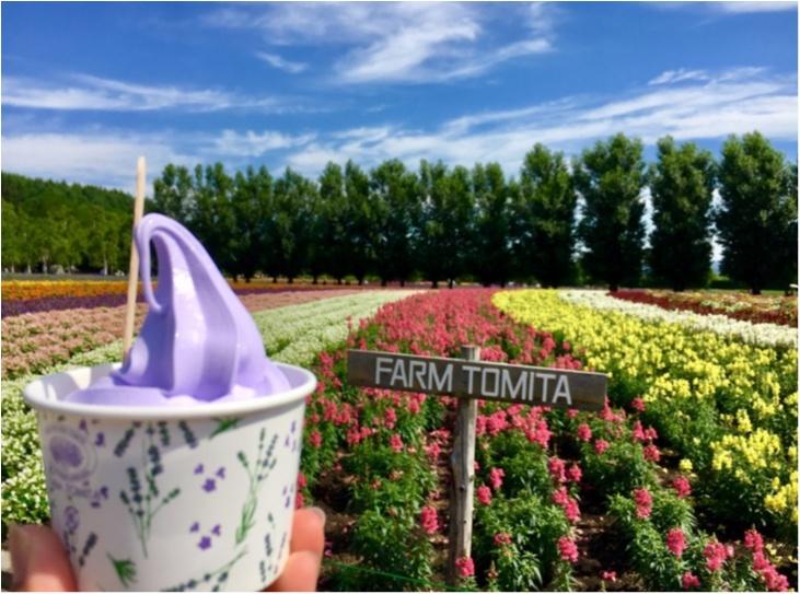 北海道《ラベンダー畑》で初夏を感じて♪花のじゅうたん「ファーム富田」_3