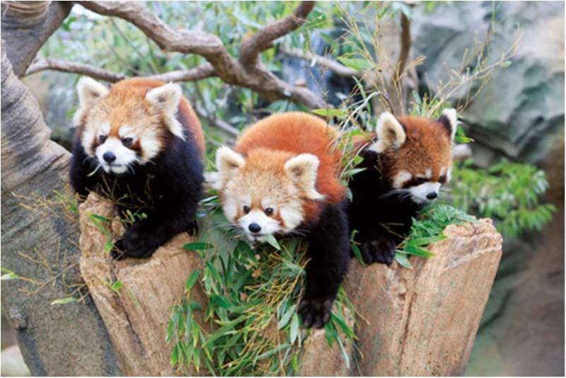 新エリアOPENで大人気の『神戸動物公園』によく行きます!【ニッポン全国ご当地OLのリアルな生態リサーチ】_3
