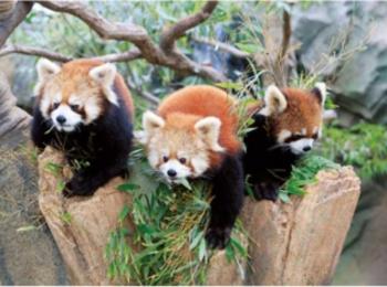 新エリアOPENで大人気の『神戸動物公園』によく行きます!【ニッポン全国ご当地OLのリアルな生態リサーチ】