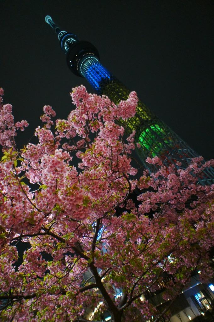 《ひと足お先にお花見❤️》【都内】で楽しめるおすすめの夜桜スポットはココだ☝︎❤︎_1