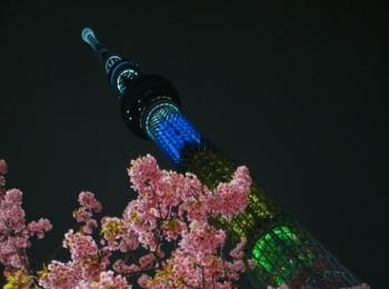 《ひと足お先にお花見❤️》【都内】で楽しめるおすすめの夜桜スポットはココだ☝︎❤︎
