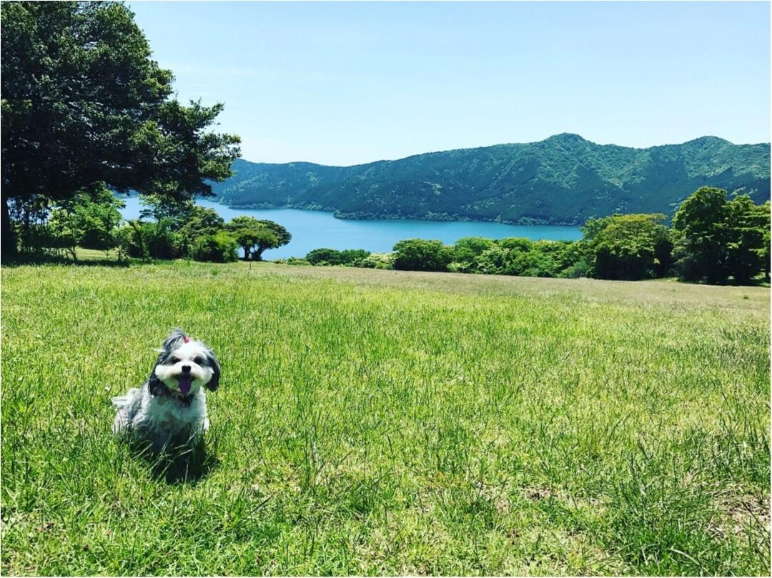 【今日のわんこ】いい天気♡ 太郎くん夏を満喫中♪_1