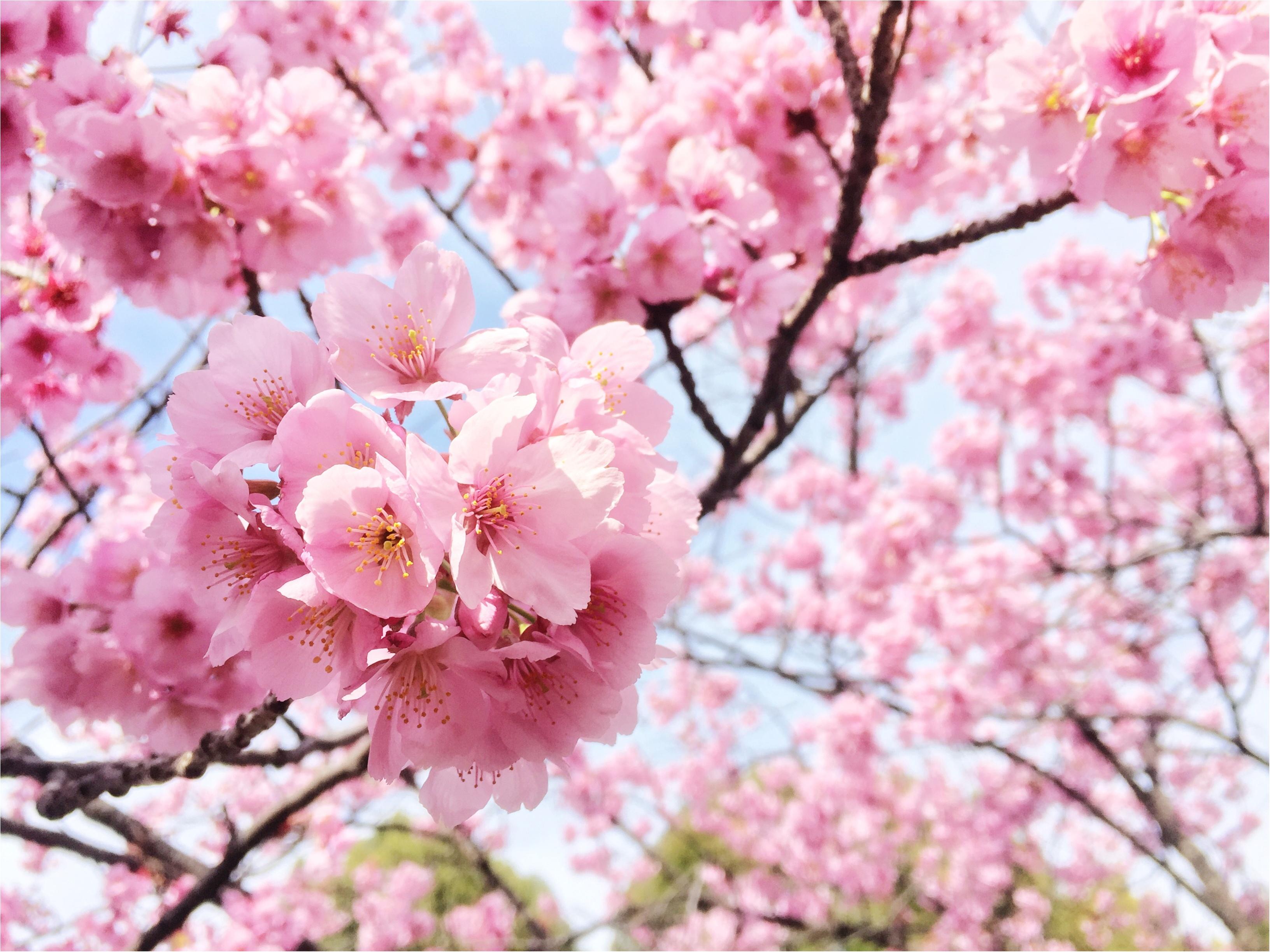 春最高!お花見最高!!モアハピ最高!!!_13
