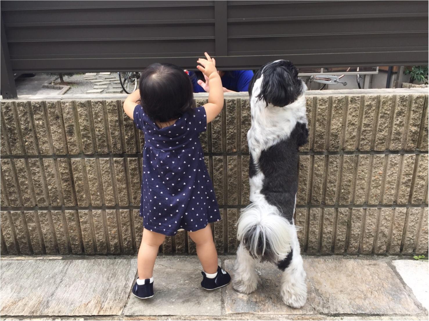 【 今日のわんこ】じーーーー!!  アイビーくんと赤ちゃん_1