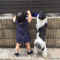 【 今日のわんこ】じーーーー!!  アイビーくんと赤ちゃん