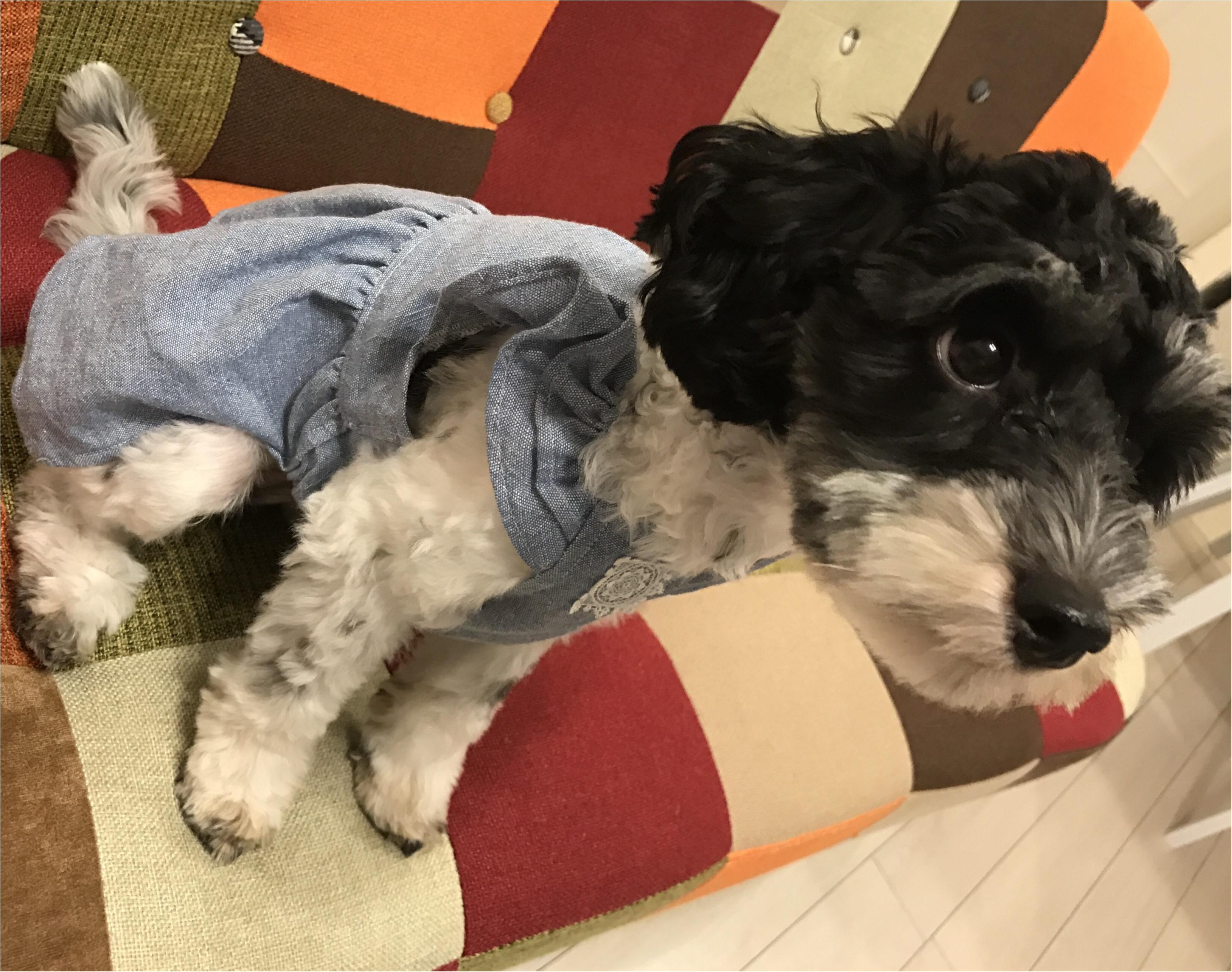 【コーデ】MHLのTシャツで白Tコーデ☆愛犬とカジュアルで動きやすい服装でマルシェに出店! _3